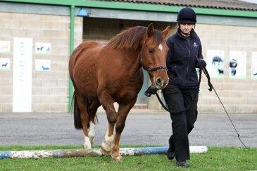 Bella the horse