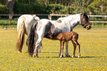 Beautiful foal named after inspirational veteran Captain Tom Moore