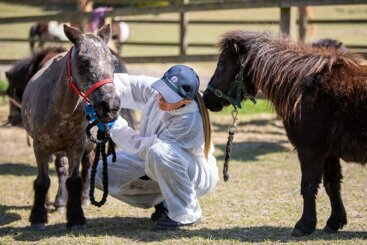 Survey shows dramatic effect of Covid-19 on equine rescue organisations
