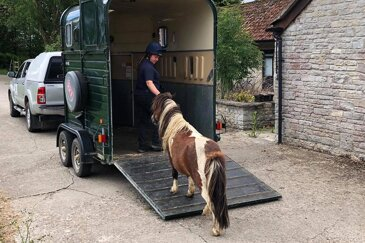 Preparation and practice: key aspects to loading and travelling your horse safely