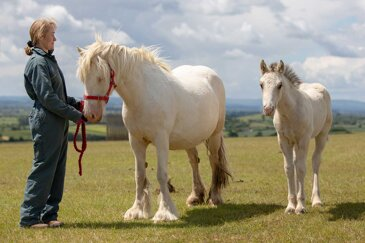 What does biosecurity mean and how do you quarantine a new horse?