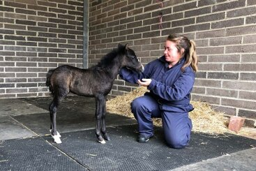 Abandoned foal to video star: Duke's life has taken a happy turn.