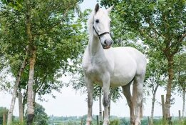 white horse standing in front of trees